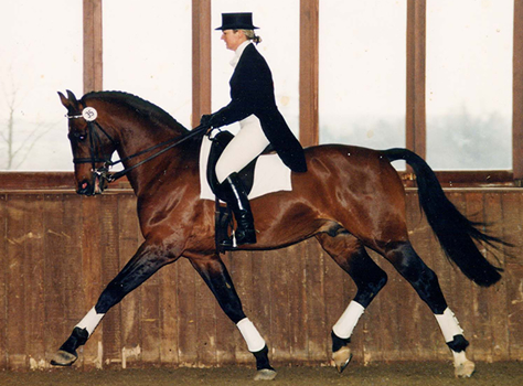Katy Holder-Vale's Witcham House Farm Stud breeding Hanoverian stallions for dressage introduces Glucksfall.